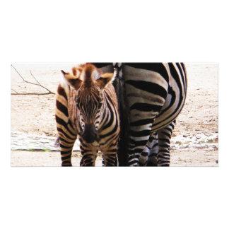 Baby Zebra Customised Photo Card