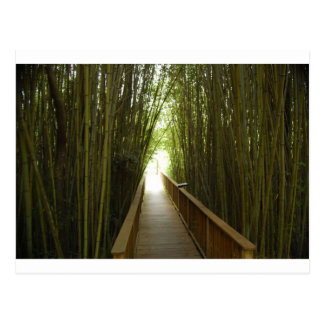 Bamboo Forest  Trail Postcard