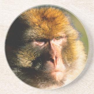 Barbary Macaque (Macaca Sylvanus) Portrait Coaster