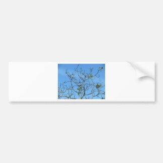 Bare chestnut tree in a sunny day bumper sticker