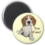Beagle Too Cute Magnet