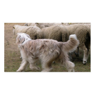 bearded collie working.png pack of standard business cards