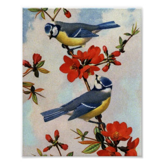 Beautiful Bluebirds Art Poster