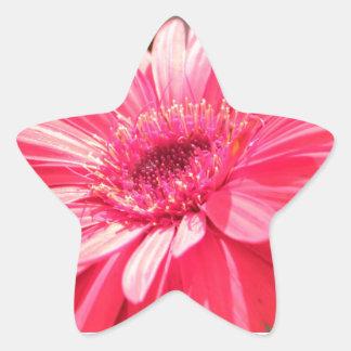 Beautiful Bright Pink Wildflower Star Sticker