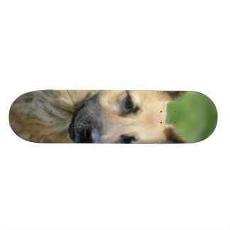 Beautiful Dog 21.6 Cm Skateboard Deck