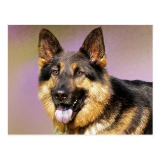 Beautiful German Shepherd dog portrait Postcard