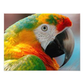 Beautiful Macaw Photo Print