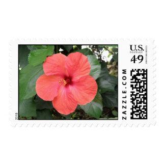 Beautiful Orange Hibiscus Flower Postage Stamp