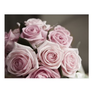 Beautiful pink rose bouquet postcard