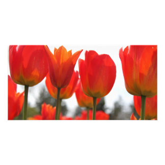 Beautiful Red Tulip Flowers. Photo Cards