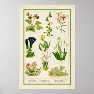 Beautiful Vintage Inspired Color Botanical Floral Poster