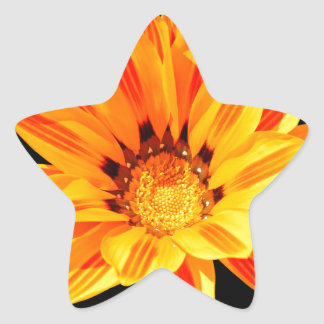 Beauty in Close Up Star Sticker