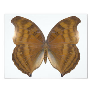 BeechWing Butterfly 11 Cm X 14 Cm Invitation Card