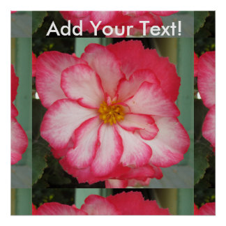 Begonia Red White Flower Bloom Poster