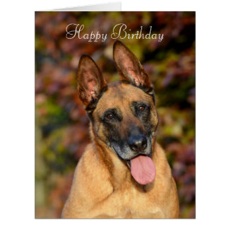Belgian Malinois dog custom birthday card
