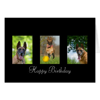 Belgian Malinois dog lovers custom birthday card