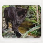 Belise City Zoo. Black panther Mouse Pad