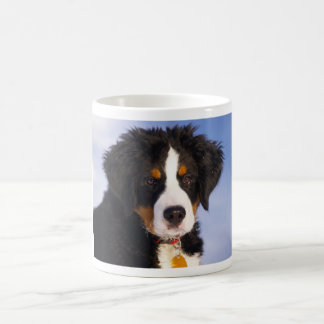 Bernese Mountain Dog - Cute Puppy Photo Basic White Mug