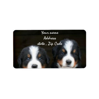 Bernese Mountain dog puppies address label