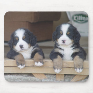Bernese Mountain dog puppies mouse mat