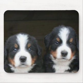 Bernese mountain dog puppies mousepad