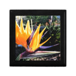 Bird of Paradise Small Square Gift Box