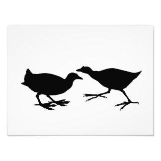 Birds Photograph