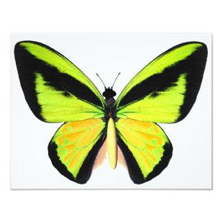BirdWingZ Butterfly 11 Cm X 14 Cm Invitation Card