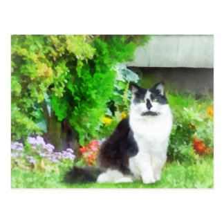 Black and White Cat by Flowers Postcard