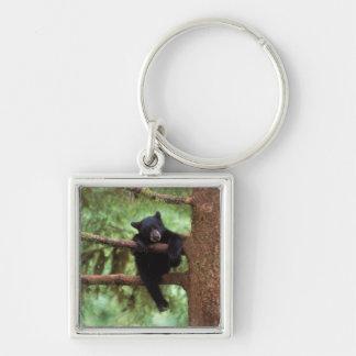 black bear, Ursus americanus, cub in a tree Silver-Colored Square Key Ring