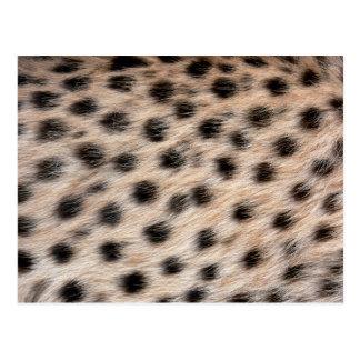 black spotted Cheetah fur or Skin Texture Template Postcard
