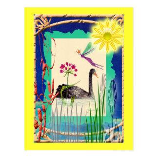 black swan with sun postcard