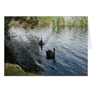 Black Swans, Perth Greeting Card