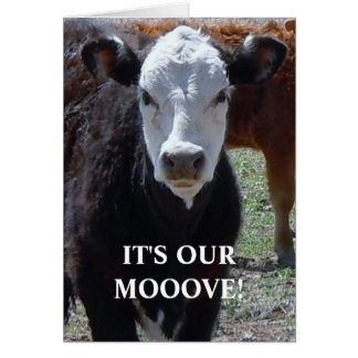 Black & White Cow - Western Change of Address Greeting Card