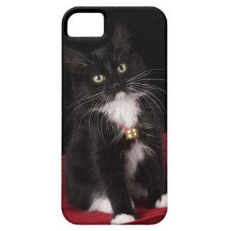 Black & white short-haired kitten,2 1/2 months case for the iPhone 5