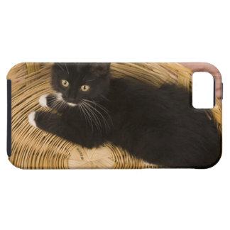 Black & white short-haired kitten on hamper lid, 2 iPhone 5 case
