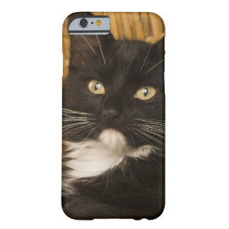 Black & white short-haired kitten on hamper lid, barely there iPhone 6 case