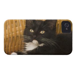 Black & white short-haired kitten on hamper lid, iPhone 4 covers