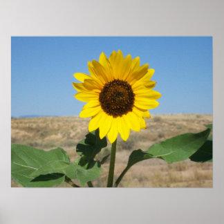Bloom Where You're Planted - Prairie Flower Print
