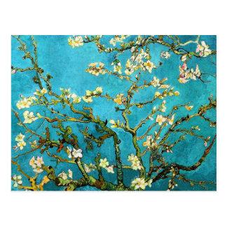 Blossoming Almond Tree Van Gogh Fine Art Postcard
