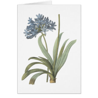 blue African lily(Agapanthus) by Redouté Greeting Card