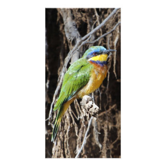 Blue-breasted Bee-eater Personalized Photo Card