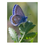 blue butterfly postcard