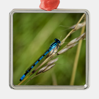 Blue Damselfly macro Silver-Colored Square Decoration