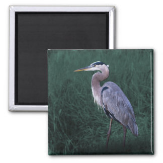 Blue Heron Standing in Grass Magnet