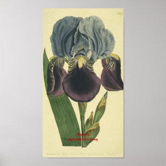 Blue Iris Botanical Print