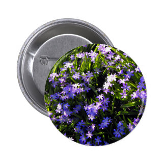 Blue Squill Spring Flowers 6 Cm Round Badge