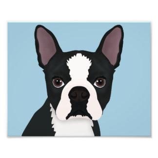boston terrier cartoon photographic print
