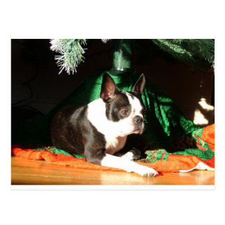 Boston Terrier Christmas with Piper Postcard