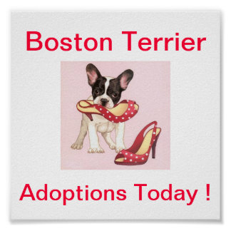 Boston Terrier Dog Adoptions Today Sign Poster